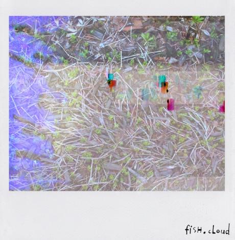 polaroid-03