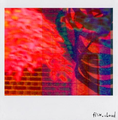 polaroid-05