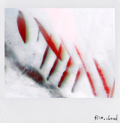polaroid-33